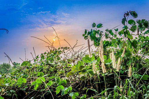 Nature, Flora, Summer, Tree, Tropical, Sunset, Plant