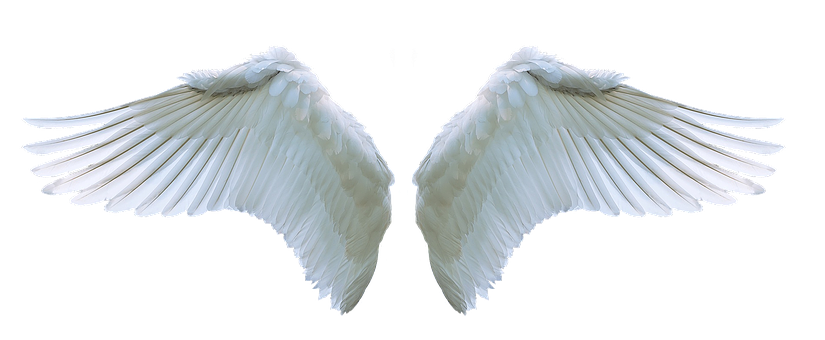 Wing, Angel, Swan, White, Swing, Feather, Symbol, Fly