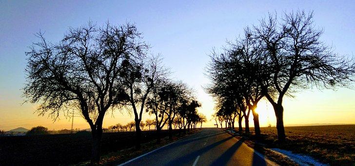 Path, Grass, Trees, Sun, West, Yellow, Green, Blue