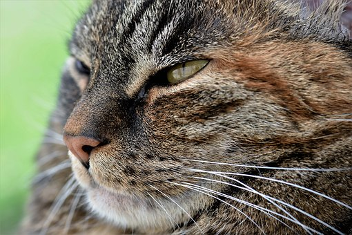 Cat, Animal, Mammal, Animal World, Nature, Close