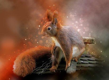 Animal, Squirrel, Furry, Cute, Garden, Climb, Ears
