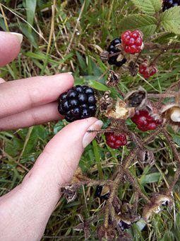 Fruit, Food, Nature, Berry, Freshness, Approach