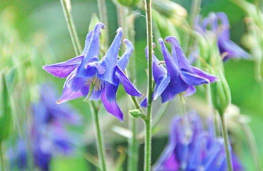 Plant, Nature, Summer, Garden, Sheet, Blue, Hat, Bloom