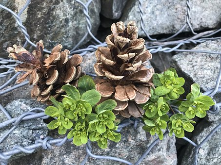 Still Life, Nature, Stones, Cones, Green, Brown, Gray
