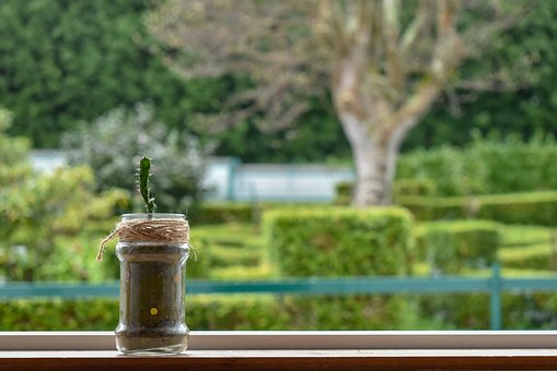 Cactus, Free, Tied, Window, Views, Garden, Different