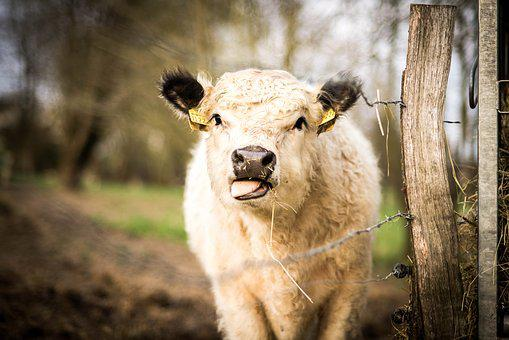 Mammal, Animal, Nature, Grass, Farm, Portrait, Animals