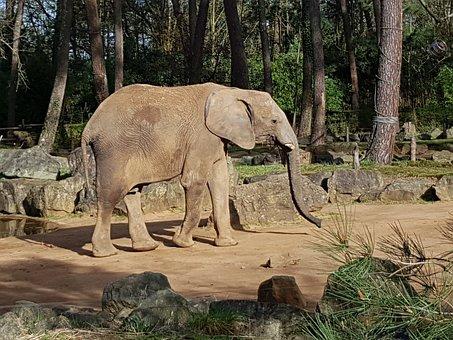 Nature, Fauna, Mammal, Elephant