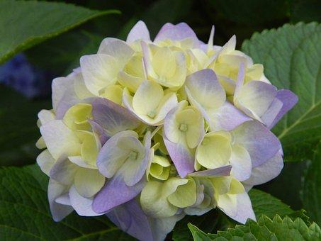 Nature, Plant, Flower, Garden, Leaf, Flowers, Floral