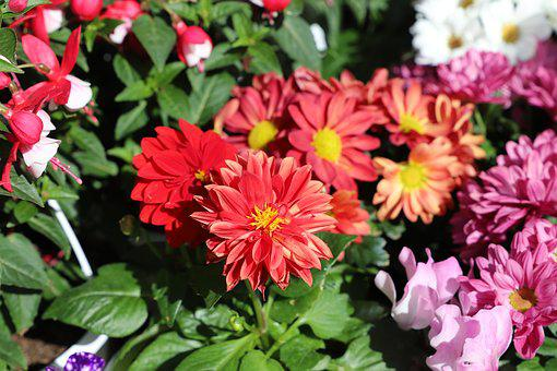 Flower, Plant, Nature, Garden, Floral, Summer, Leaf