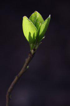 Leaves, Green, Branch, Nature, New