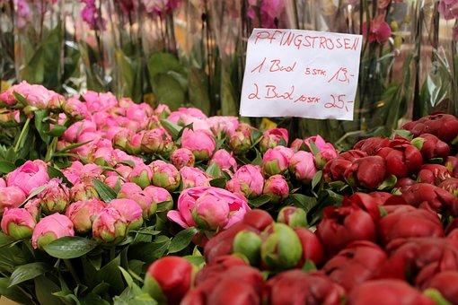Flower, Garden, Plant, Nature, Leaf, Market, Naschmarkt