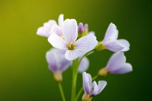 Nature, Flower, Plant, Leaf, Summer, Garden, Petal