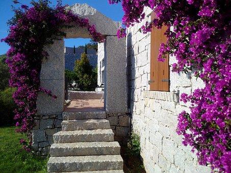 Sardinia, Bougainvillea, Triple Flower, Li Conchi