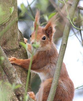 Mammal, Nature, Cute, Squirrel, Animal World, Animal