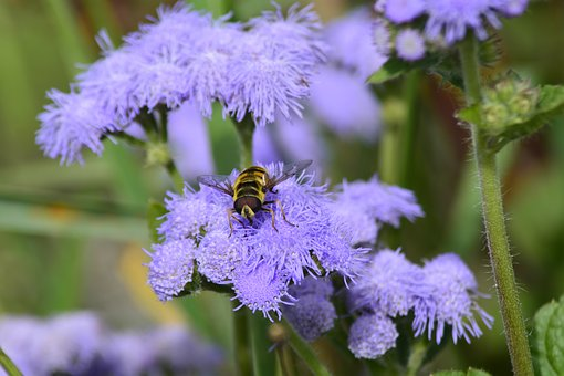 Nature, Flower, Plant, Garden, Close, Fly, Hoverfly