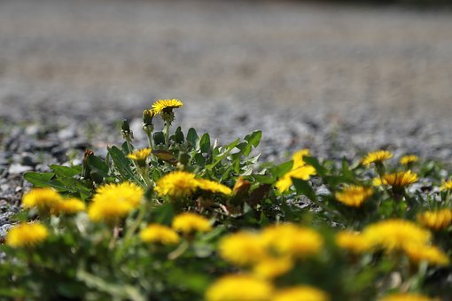 Nature, Grass, Hayfields, Flowers, Outdoors, Plants