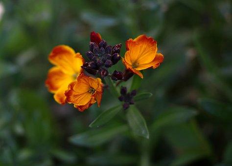 Flower, Orange, Supplies, Green