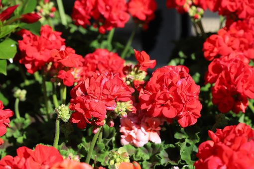 Flower, Plant, Nature, Garden, Floral, Petal, Flowering