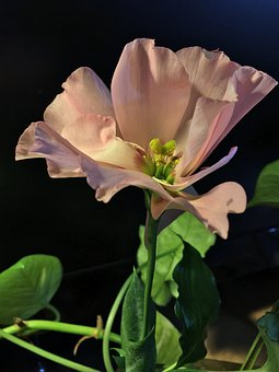 Pink Flower, Pistils, Flower, Stamens, Pink, Petals