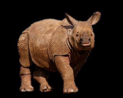 Animals, Wild Animals, Rhino, Panzer, Thick Skin