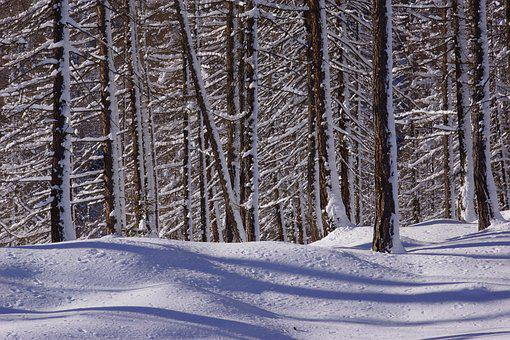 Snow, Winter, Wood, Tree, Cold, Forest, Firs, Nature