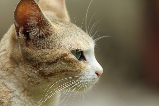 Cat, Animal, Cute, Nature, Portrait, Pet, Mammal, Young