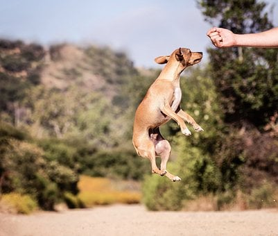 Outdoors, Dog, Nature, Animal, Jump, Adorable, Cheerful