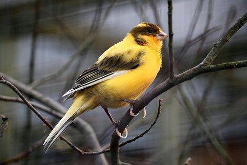 Bird, Animal World, Feather, Birds, Animal, Close, Bill