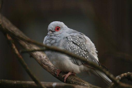 Bird, Animal World, Nature, Animal, Wing, Dove, Close