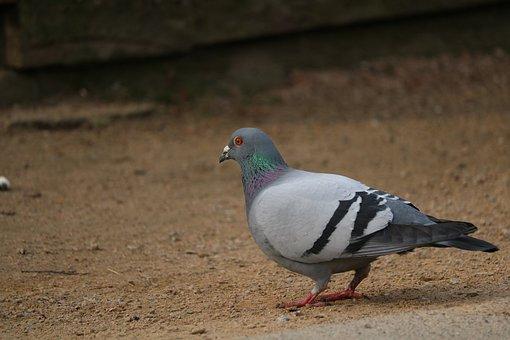 Bird, Nature, Animal World, Dove, Feather, Bill, Wing