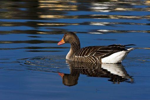Birds, Water