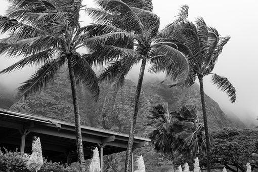 Palm, People, Tree, Beach, Seashore, Hawaii, Exotic
