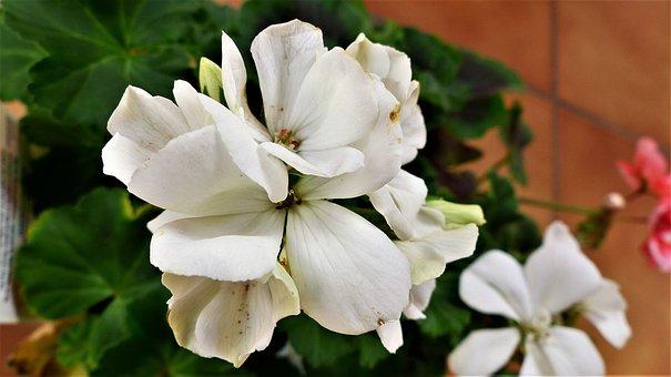 Flower, Plant, Nature, Leaf, Garden, Fulfillment