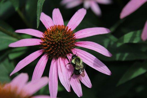 Nature, Flower, Flora, Garden, Summer, Bee, Plant