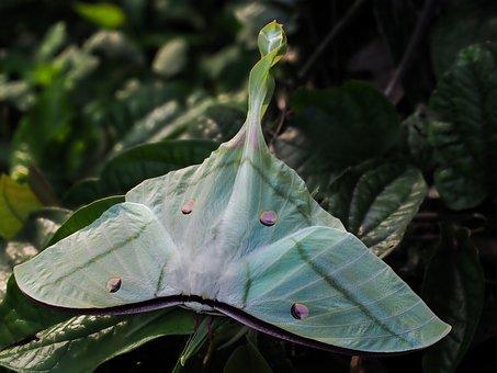 Moths, Mr Luna, Green
