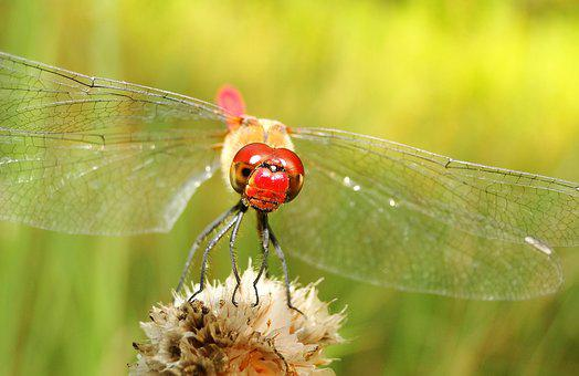 Nature, Insect, Summer, Leaf, Plant, Animals
