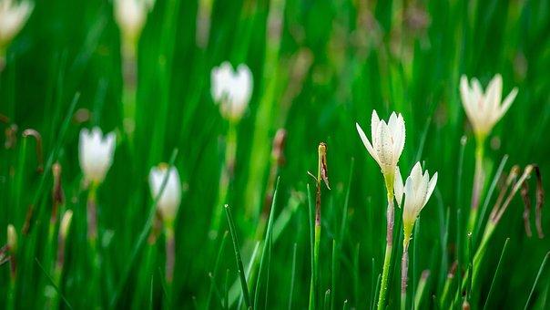 Lotus Soil, Flowers