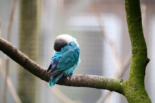 Bird, Nature, Animal, Animal World, Feather, Iridescent