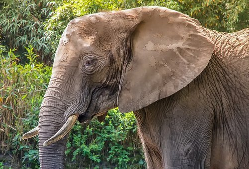 Nature, Animal, Mammal, Animal World, Elephant, Zoo