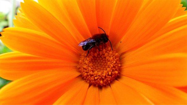 Nature, No Person, Flower, Plant, Plants Flowering