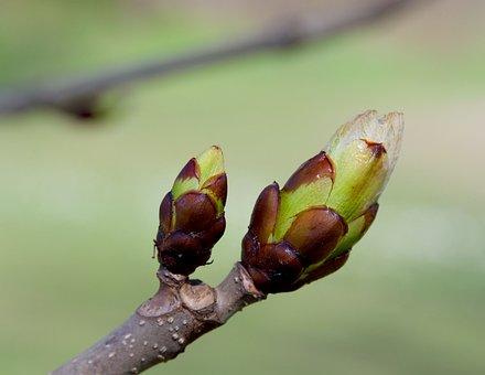Nature, Leaf, Plant, Growth, Flower, Daylight, Garden