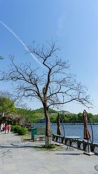 Tree, Nature, Waters, Wood, Landscape, Dead Wood, Trunk