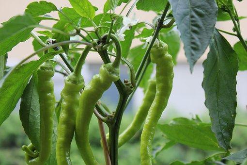 Food, Leaf, Plant, Growth, Vegetables, Pepper, Green