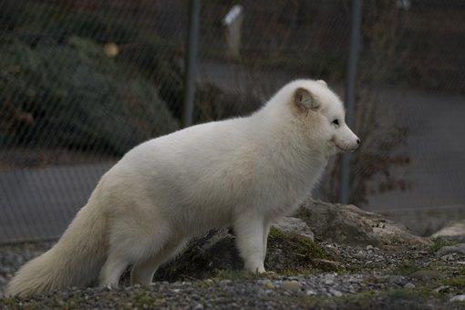 Mammal, Nature, Animal World, Animal, Frosty