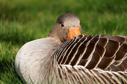 Nature, Bird, Animal World, Animal, Feather, Bill, Wild