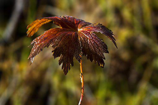 The Nature Of The, Leaf, Autumn