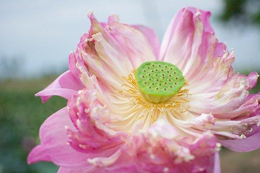 Pink, Flowers, Nature, Background, Beautiful, Beauty