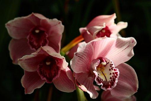 Flower, Plant, Nature, Petal, Floral, Botanical, Bright