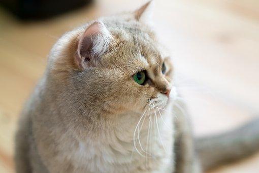 Animals, Charming, Mammals, Cat, Pets, Fur, Fluffy