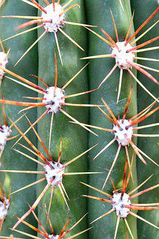 Cactus, Thorn, Sharp, Juice Plant, Move, Barbed, Desert